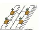 Hydroponika: systemy kropelkowe