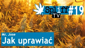 Spliff TV (19) Mr Jose: Jak uprawiać ?